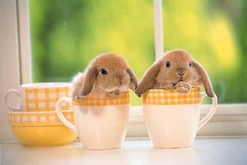 20060111131821-bunnies-cups.jpg